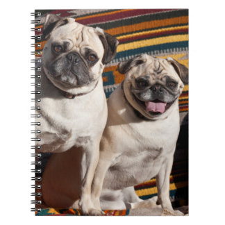 USA, New Mexico. Two Pugs Together Spiral Notebook