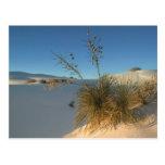 USA, New Mexico, White Sands National 3 Postcard