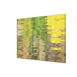 USA, New York, Adirondacks, Reflections in water Canvas Print