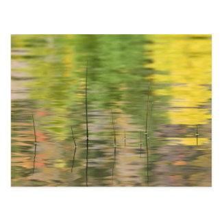 USA, New York, Adirondacks, Reflections in water Postcard