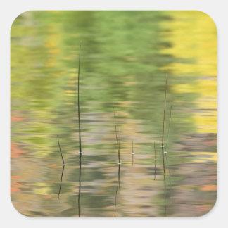 USA, New York, Adirondacks, Reflections in water Square Sticker