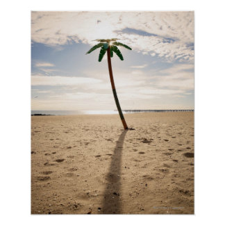 USA, New York City, Coney Island, palm tree on Poster
