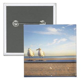 USA, New York City, Coney Island, three seagulls Button