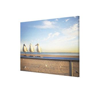 USA, New York City, Coney Island, three seagulls Canvas Print