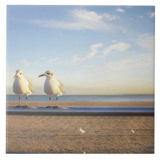 USA, New York City, Coney Island, three seagulls Large Square Tile
