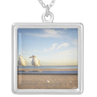 USA, New York City, Coney Island, three seagulls Silver Plated Necklace