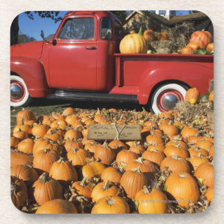 USA, New York, Peconic, pumpkin farm with pickup Beverage Coaster