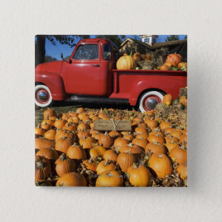 USA, New York, Peconic, pumpkin farm with pickup Pinback Button