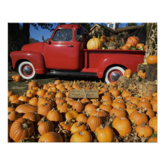 USA, New York, Peconic, pumpkin farm with pickup Poster