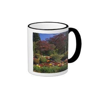 USA, New York, Saugerties, Seamon Park. Autumn Ringer Mug