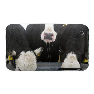 USA, New York State, Cows drinking from frozen iPhone 3 Case-Mate Case