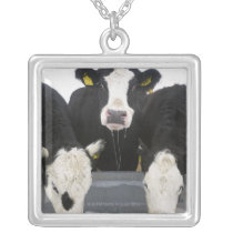 USA, New York State, Cows drinking from frozen Silver Plated Necklace