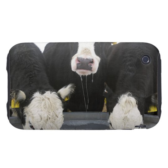 USA, New York State, Cows drinking from frozen Tough iPhone 3 Cover
