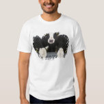 USA, New York State, Cows drinking from frozen Tshirts