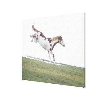 USA, New York State, Hudson, Horse jumping in Canvas Print