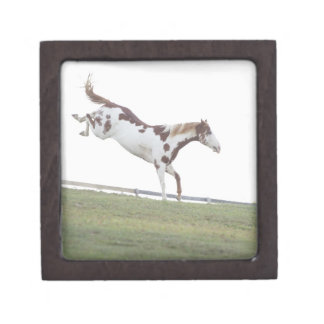 USA, New York State, Hudson, Horse jumping in Gift Box