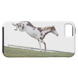 USA, New York State, Hudson, Horse jumping in iPhone SE/5/5s Case