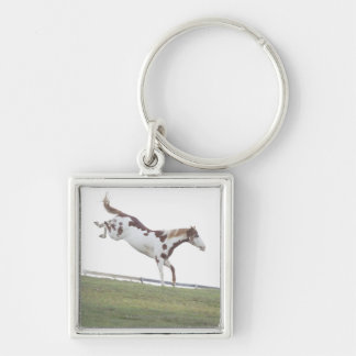 USA, New York State, Hudson, Horse jumping in Keychain