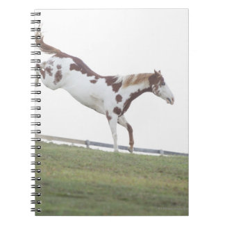 USA, New York State, Hudson, Horse jumping in Note Book