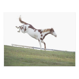 USA, New York State, Hudson, Horse jumping in Postcard
