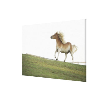 USA, New York State, Hudson, Horse running in 2 Canvas Print