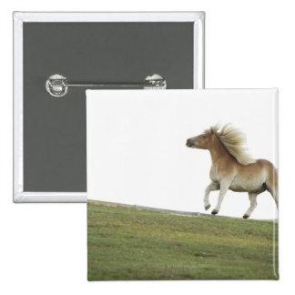 USA, New York State, Hudson, Horse running in 2 Pinback Button