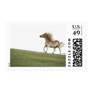 USA, New York State, Hudson, Horse running in 2 Stamp