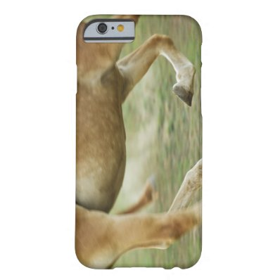 USA, New York State, Hudson, Horse running in Barely There iPhone 6 Case