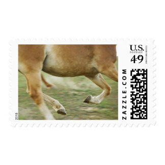 USA, New York State, Hudson, Horse running in Stamps