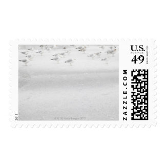 USA, New York State, Rockaway Beach, seagull on Postage