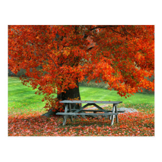 USA, New York, West Park. Bench Under Maple Postcard