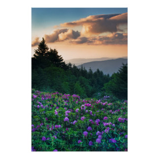 USA, North Carolina. Catawba rhododendrons Poster