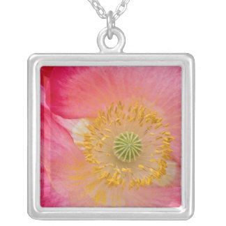 USA, North Carolina. Close-up of poppy interior Silver Plated Necklace