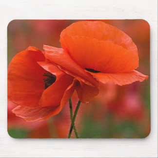 USA, North Carolina. Close-up of poppy Mouse Pad