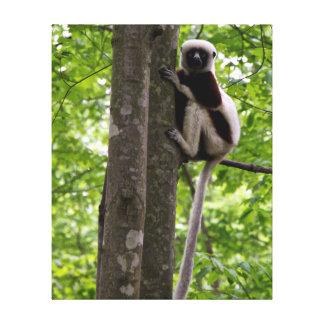 USA, North Carolina, Duke Lemur Center 2 Canvas Prints