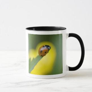 USA, North Carolina, Ladybug on tip of leaf. Mug