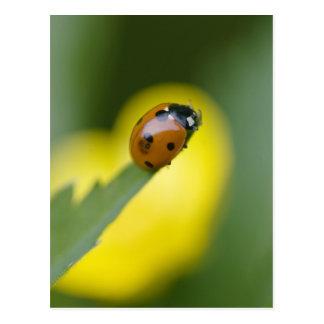 USA, North Carolina, Ladybug on tip of leaf. Postcard