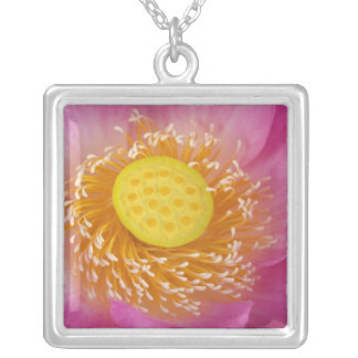 USA; North Carolina; Lotus blooming in the Square Pendant Necklace