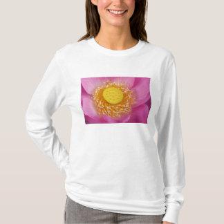 USA; North Carolina; Lotus blooming in the T-Shirt