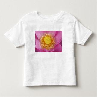 USA; North Carolina; Lotus blooming in the Toddler T-shirt