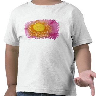 USA; North Carolina; Lotus blooming in the Shirts