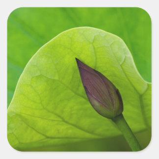 USA; North Carolina; Lotus leaf and bud Square Sticker