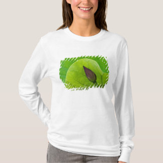 USA; North Carolina; Lotus leaf and bud T-Shirt
