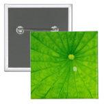 USA; North Carolina; Lotus leaf with dew drop Button