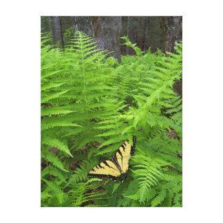 USA, North Carolina. Swallowtail butterfly Canvas Print