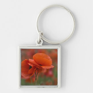 USA, North Carolina. Two red poppies Keychain