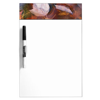 USA, Northeast, Fall leaves in puddle with Dry-Erase Board