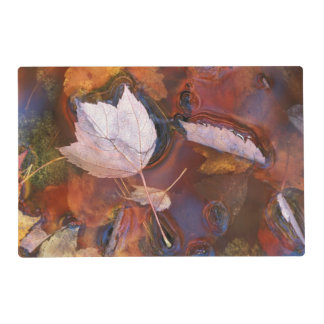 USA, Northeast, Fall leaves in puddle with Placemat