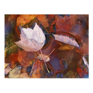 USA, Northeast, Fall leaves in puddle with Postcard