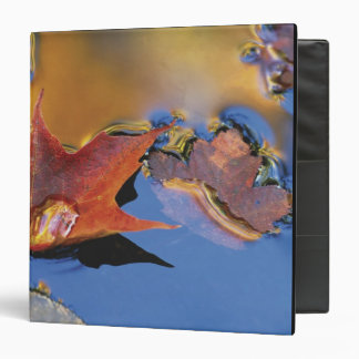 USA, Northeast, Maple Leaf in Reflection 3 Ring Binder